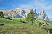 stock photo of south tyrol  - View to the famous Schlern Mountain on Seiser Alm near Kastelruth - JPG
