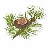 stock photo of chickadee  - chickadee Birds in the nest on a pine branch vector illustration - JPG