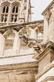 picture of gargoyles  - Detail of one gargoyle in the Cathedral of Burgos Spain - JPG