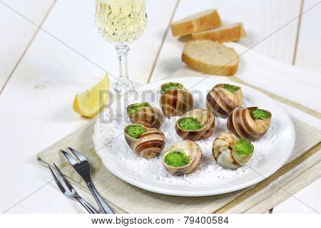 Traditional French Cuisine: Snails Sauce Burgundy