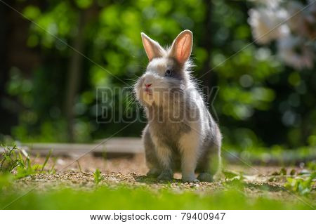 Cute Rabbit Outdoors