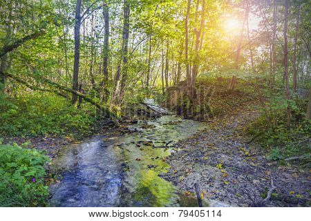 river in beautiful forest