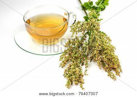 Sorrel tea
