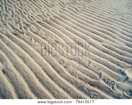 Diamondback Terrapin Tracks