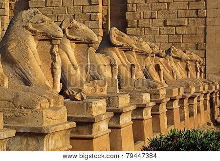 ancient egypt statues of sphinx in Luxor karnak temple at sunset