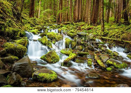 Beautiful Cascade Waterfall In Olympic National Park