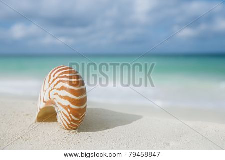 nautilus shell on white beach sand, against sea waves, shallow dof