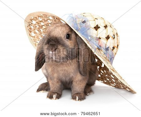 Dwarf rabbit in a straw hat.