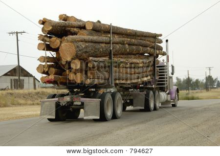 Truck Load of Logs