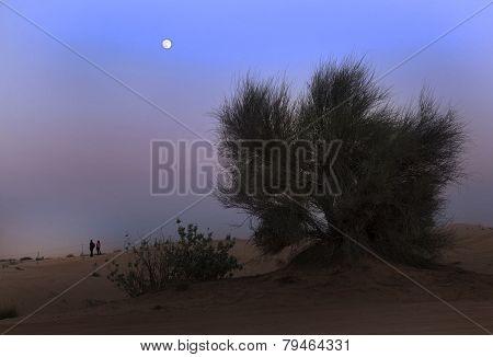 On the border of lifeless desert.