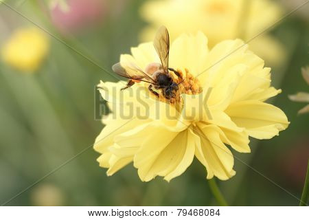 Bee Swarm Flower