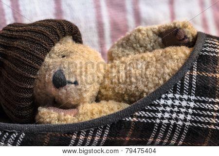 Tired Teddy Sleep in a Shoe