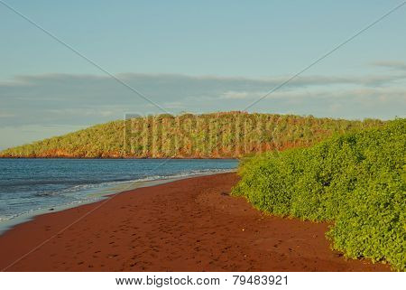 Red Sand Beach on Rabida Island