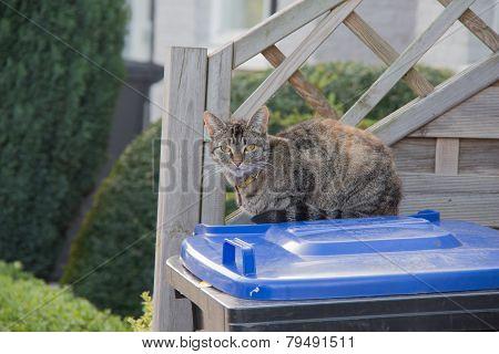 Cat sitting on a trashbin