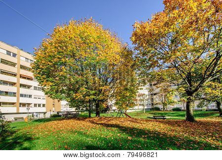 Autumn Trees In A Living Block