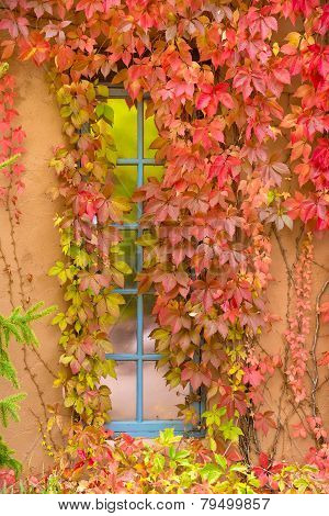 Fall Foliage Adorning A New Mexico Window