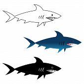image of great white shark  - Illustration of great white shark - JPG