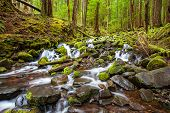 pic of olympic mountains  - cascade waterfall in the forest Olympic national park WA US - JPG