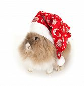 stock photo of rabbit year  - Lionhead rabbit in the New Year hat - JPG