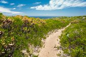 foto of naturalist  - sandy footpath through low heathy shrubs with sea beyond - JPG