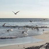 picture of swarm  - A swarm of young seagulls  - JPG