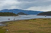 stock photo of darwin  - Wulaia Bay located on Navarino Island on the Chilean side of the Beagle Channel in Patagonia - JPG