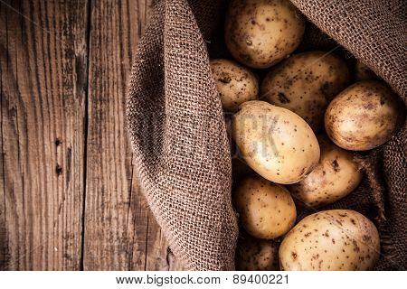 Harvest Potatoes In Burlap Sack