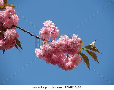 blooming twig