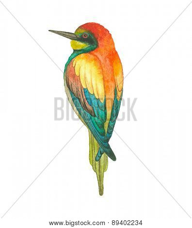 Watercolor European bee-eater bird (Merops apiaster), vector illustration.