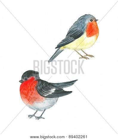Watercolor birds Robin (Erithacus rubecula) and Bullfinch (Pyrrhula pyrrhula), vector illustration.