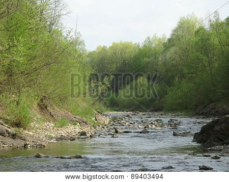 river in green woods