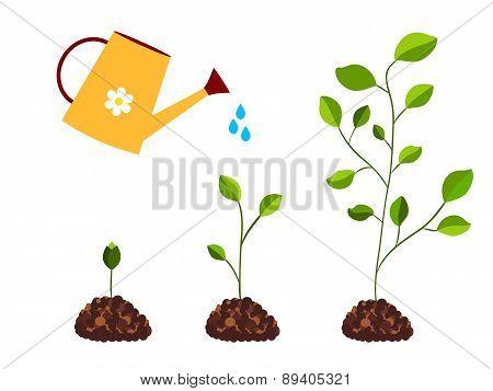 Watering Plants vector