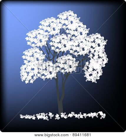 illustration with white blossoming tree on dark blue background