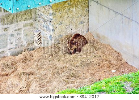 The Bern Bear Pit And Bears