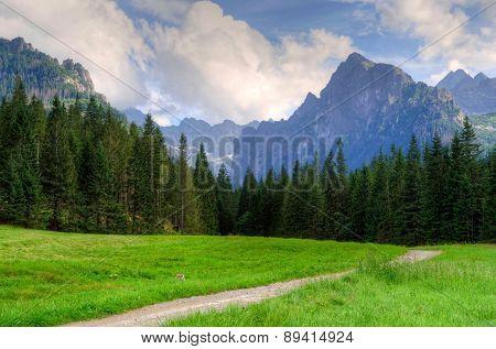 Beautiful Mountain Landscape.