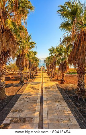 Palm alley leading to the famous Sea of Galilee. Sunset on the lake of Kinneret