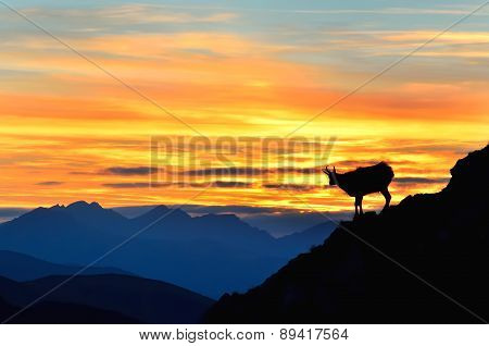 Silhouette of chamois in mountains.