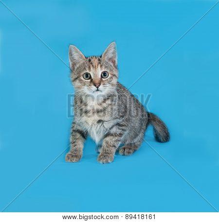 Striped Kitten Sitting On Blue