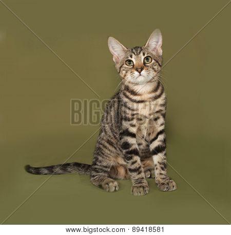 Striped Kitten Sitting On Green
