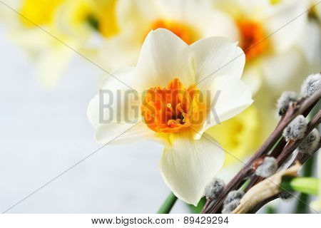Fresh narcissus flowers with willow sprigs, closeup