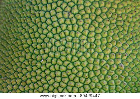 Texture Jackfruit Peel Have Thorn