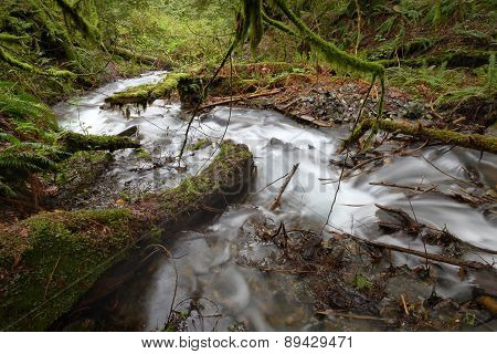 Rushing Rainforest Creek, Pacific Northwest