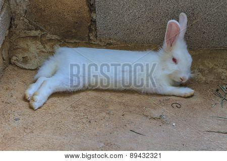 Beautiful fluffy white rabbit