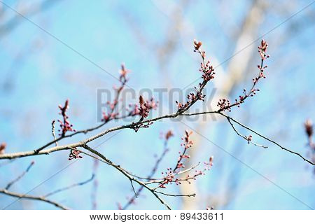 Fresh spring leaves on branch, on blue sky background