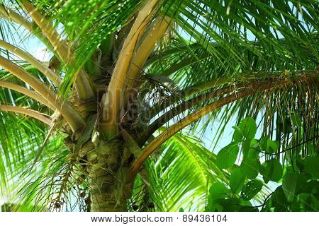 Palm leaves and blue sky on island in resort
