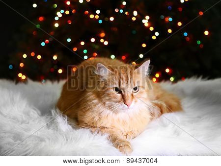Red cat lying on white carpet, on multicolor lights background