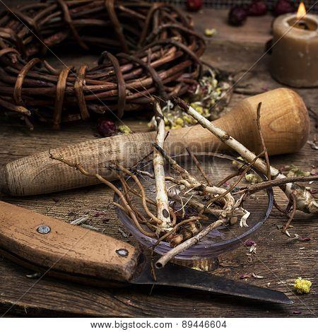 Medicinal Root