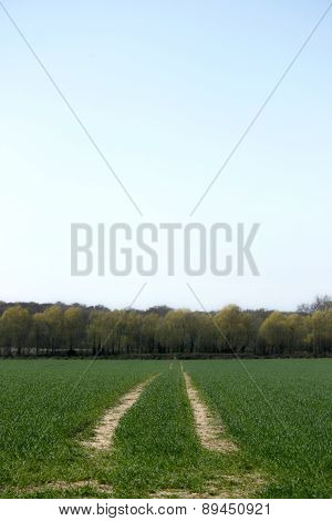 Tractor Trails In A New Field