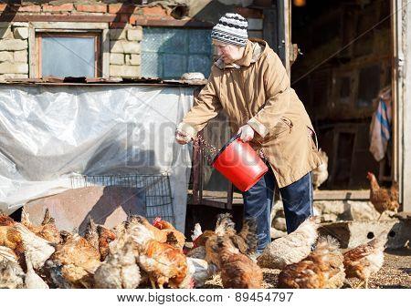 elderly woman feeding chickens from a bucket