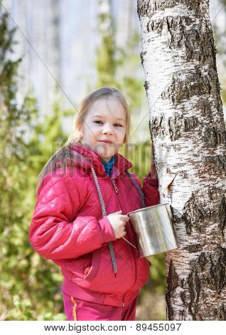 Child collects birch sap in spring forest